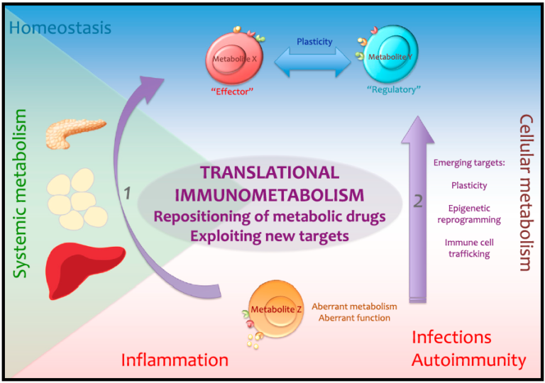 Immunometabolism: The Role of Iron in an Emerging Field