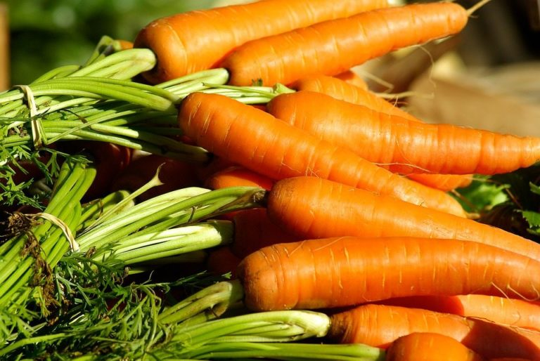 Colorful carrots get a new use, producing tracers to study the brain