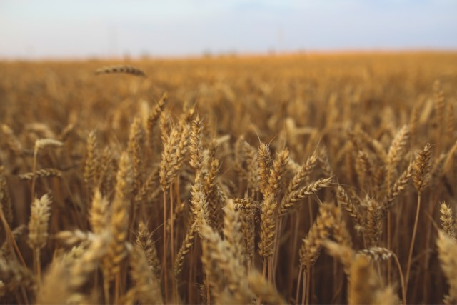 Are Whole Grains Healthier Than Refined Grains?