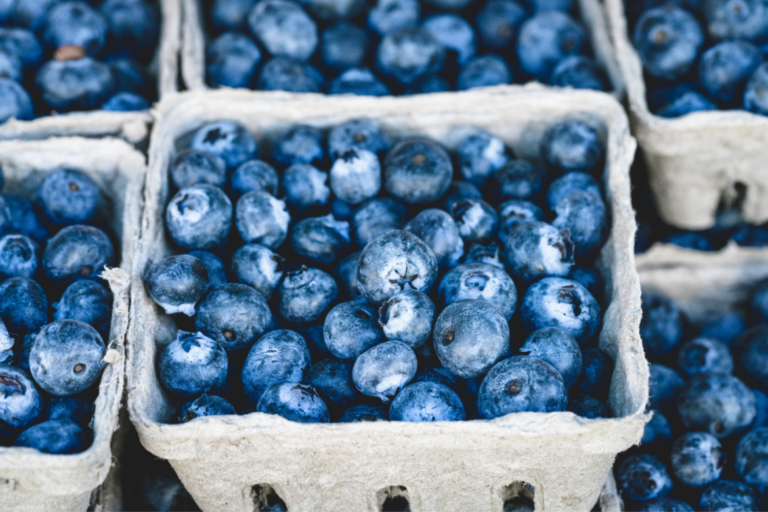 Serum from women consuming blueberries improved muscle progenitor cell function
