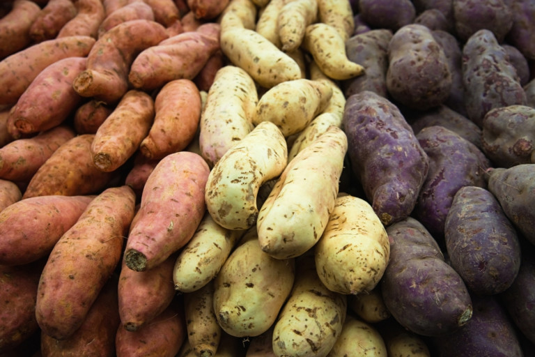 Biofortification increases iron content of potatoes and sweet potatoes, but does not negate need for additional iron to prevent deficiency