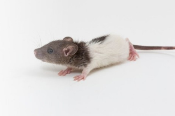 Tell us what's new in rodent nutrition!